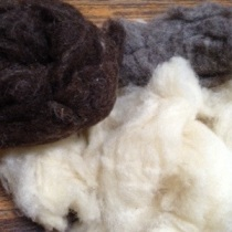 washed and carded wool